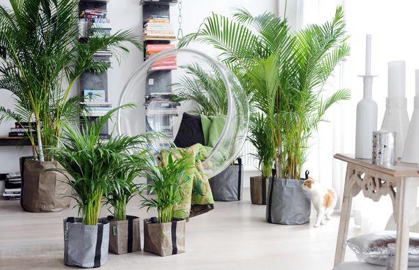 Каким должно быть качество света при выращивании растений и рассады