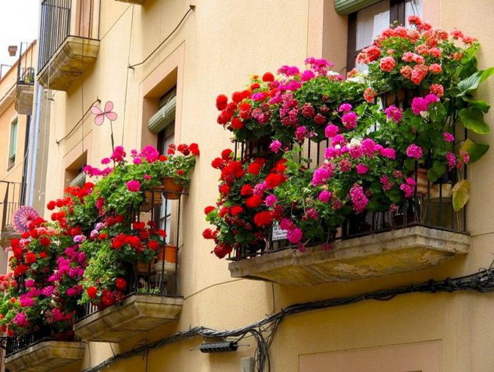 Цветку летом лучше на балконе