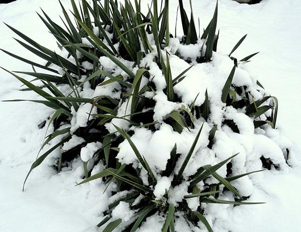 Нежданная зима