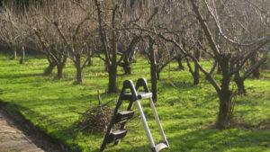 Правильная обрезка яблонь осенью: схема и сроки работы