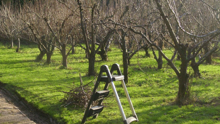 Обрезка старых яблонь осенью видео для начинающих