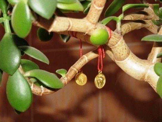 Денежное дерево - не ради денег