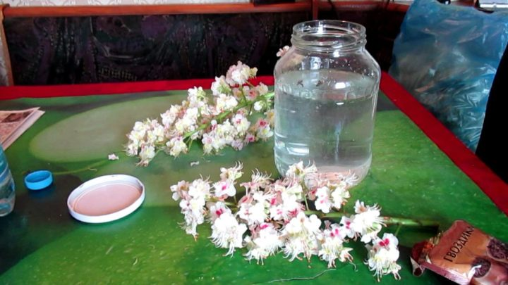 Сок цветов каштана