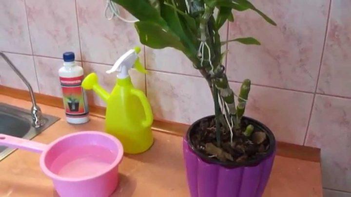 Полив орхидеи 2 раза в неделю