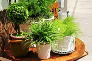 Делаем удобрение для комнатных растений в домашних условиях
