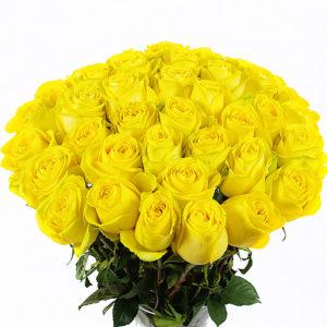 Белые и желтые розы: значение на языке цветов