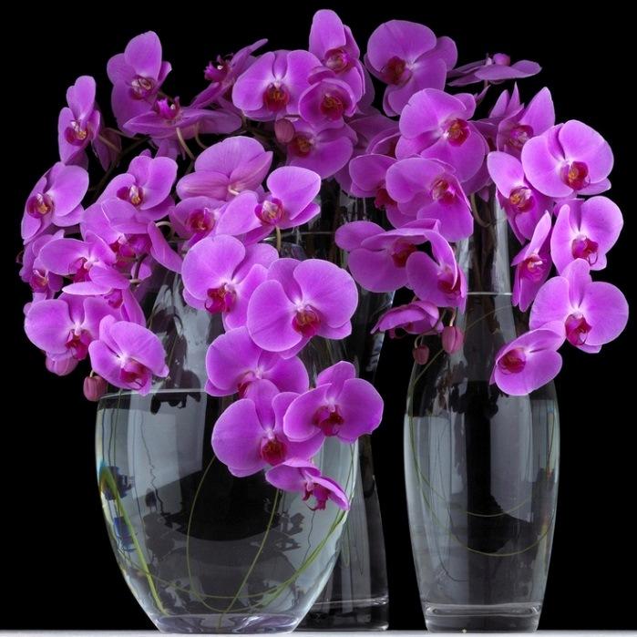 Ваша орхидея обязательно зацветет