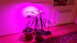 Самодельная фитолампа для растений своими руками