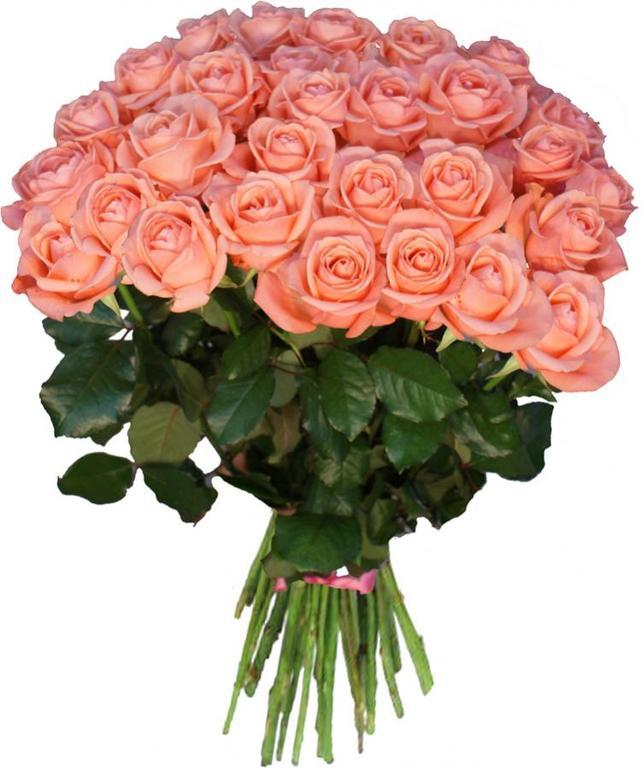 Розовые розы - символ начала нового в отношениях