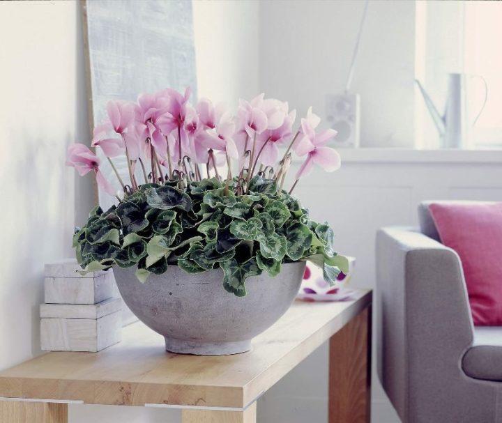 настоящее благоприятные цветы для дома с фотографиями все необходимо