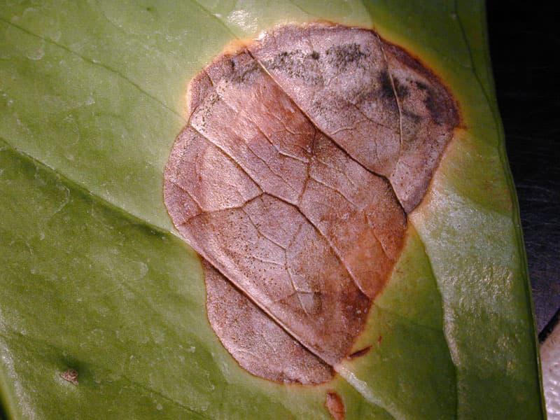 Пятна на листьях