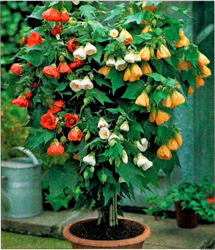 Неприхотливые комнатные растения самые популярные виды