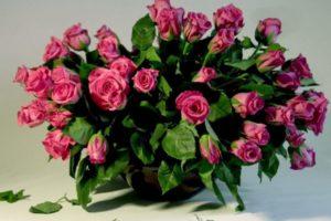 Как можно вырастить розу из черенка из букета