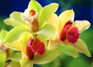 Разведение цветов: как размножаются орхидеи в домашних условиях