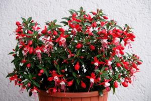 Комнатные растения полезны для дома