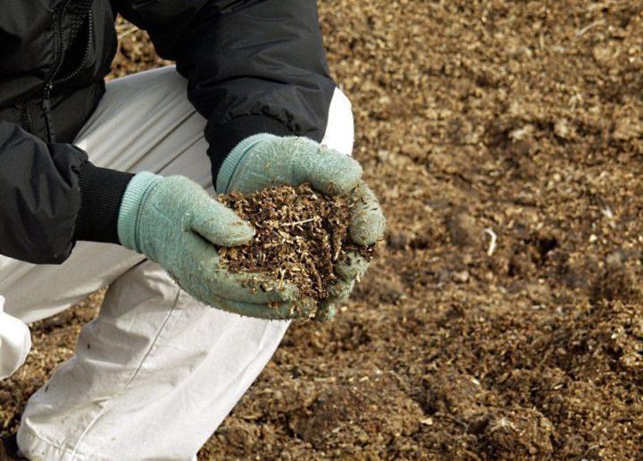 Переработка куриного помета для удобрения почвы