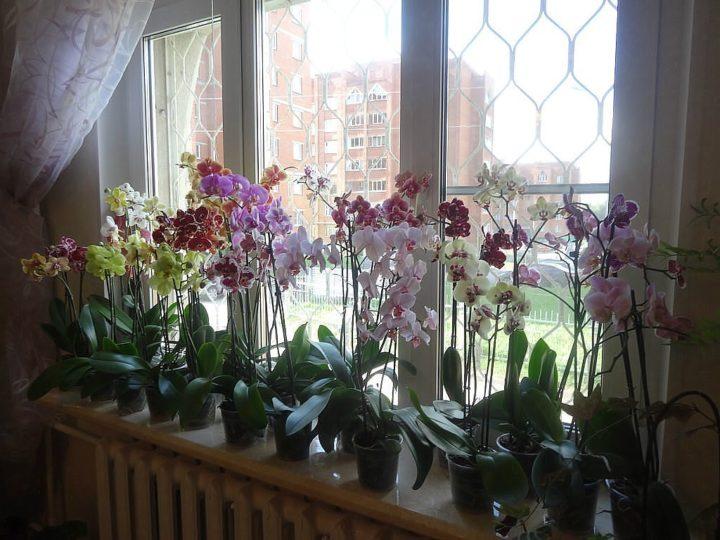 Орхидеям нужно создавать условия для цветения
