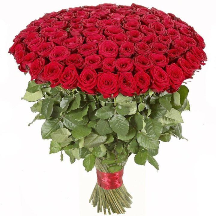 101 роза любимой женщине