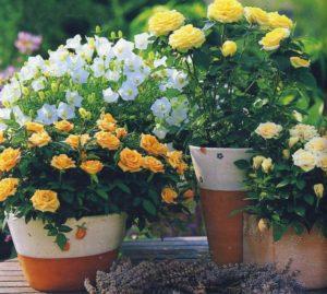 Какие красивые домашние цветы подойдут начинающим цветоводам