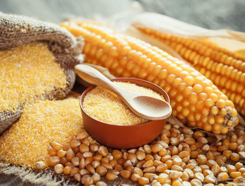 Кукуруза для кормления перепелок