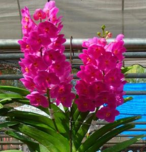Ваша любимая орхидея отцвела: что делать дальше?