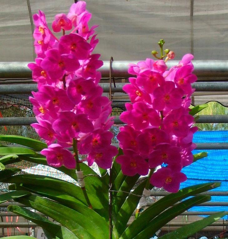 Когда орхидея отцвела - что делать после цветения дальше
