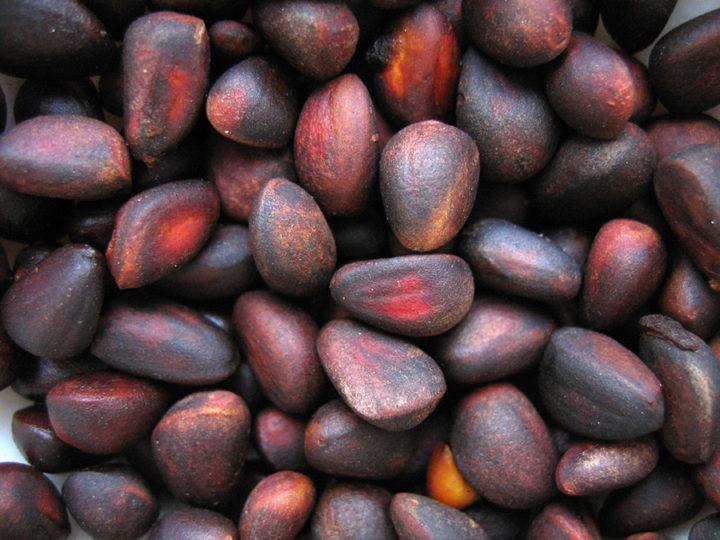 Выбираем орешки для посадки