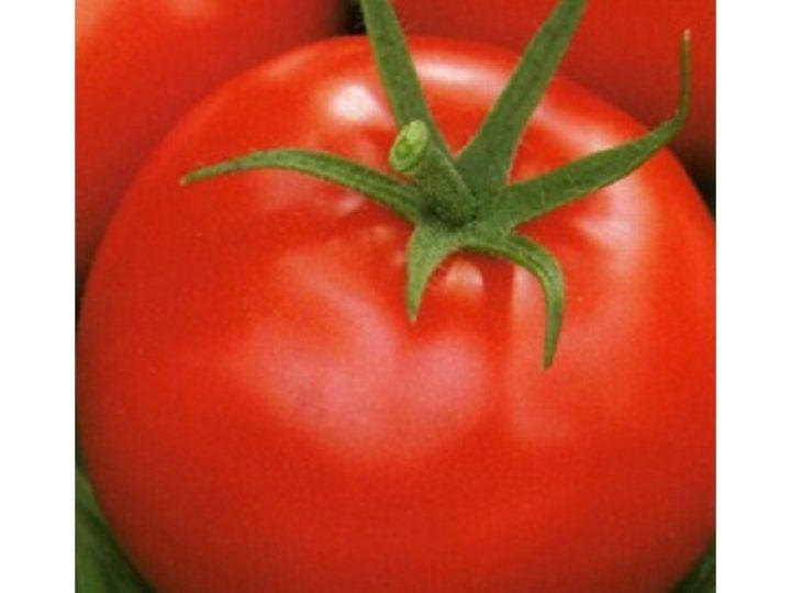 Раннеспелые томаты Афродита F1