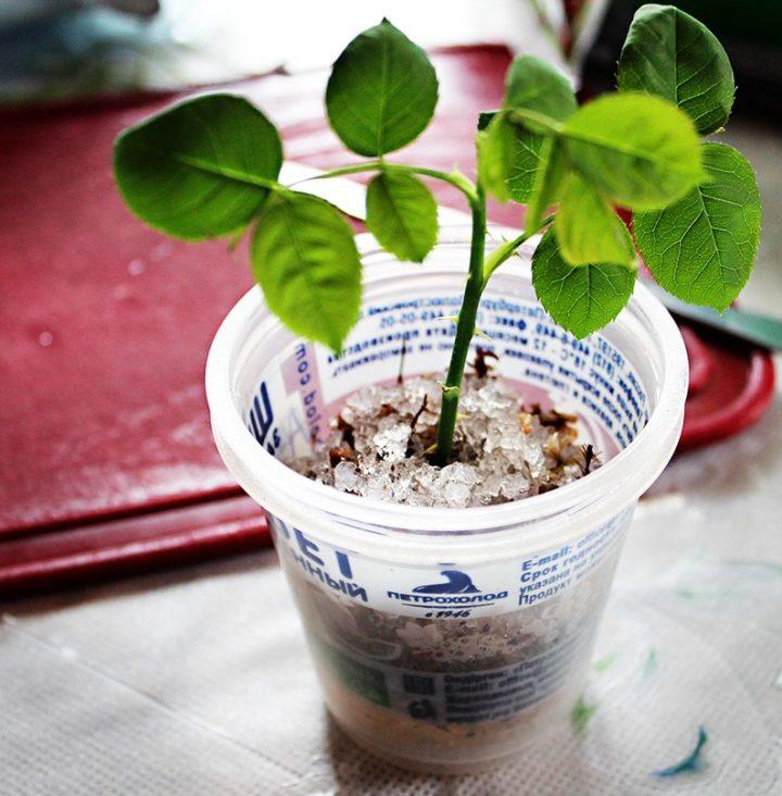 Выращивание в гидрогеле