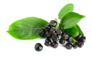 Каковы польза и вред черноплодной рябины