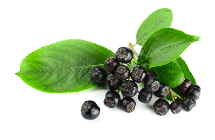 Польза черноплодной рябины и целебные рецепты