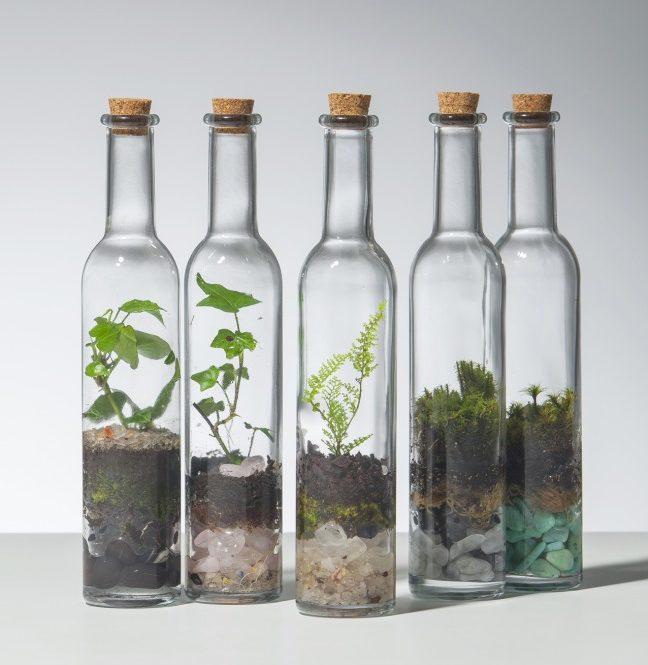 Флорариум в бутылках
