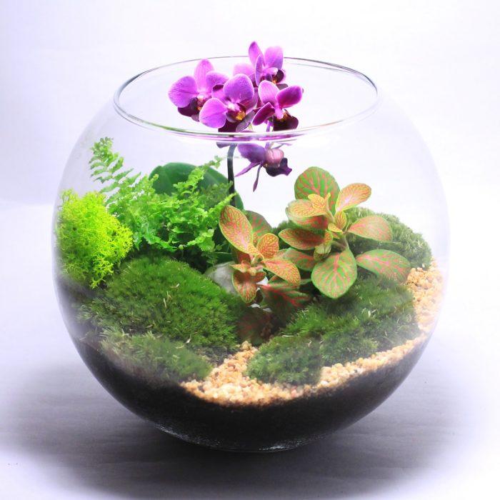 Флорариум из аквариума
