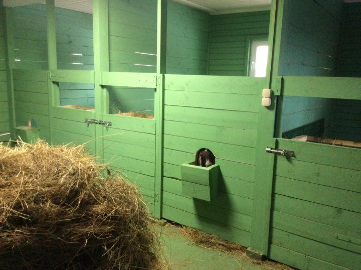 Инструкция по содержанию коз в домашних условиях для начинающих