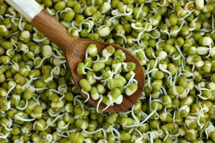 Как прорастить фасоль в домашних условиях быстро и правильно для посадки и еды