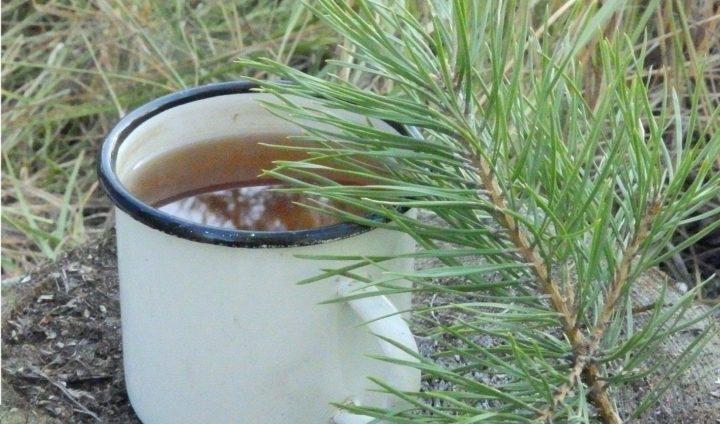 Сосновые иголки лечебные свойства и противопоказания