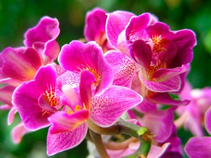 И пусть у вас будет множество красивых орхидей