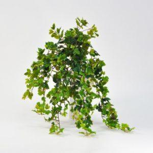 Красивое комнатное растение березка