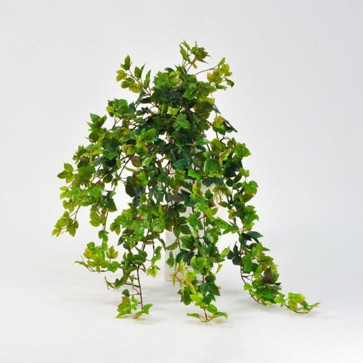 Комнатный цветок листья как у березы