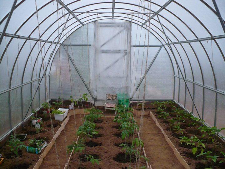 Не рекомендуется выращивание в одной теплице разных культур