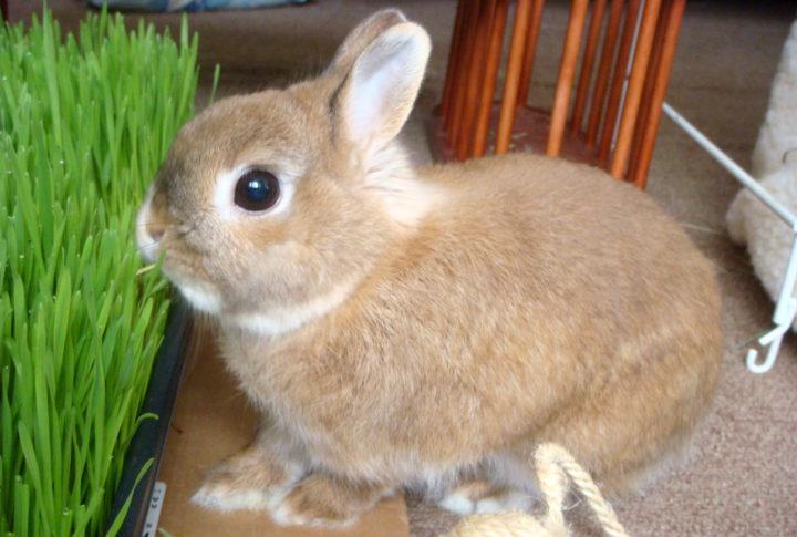 Кролики с удовольствием едят траву