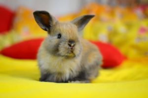 Искусственное кормление новорождённых крольчат. Кролики 64