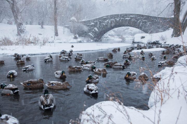 Испытание птиц зимой