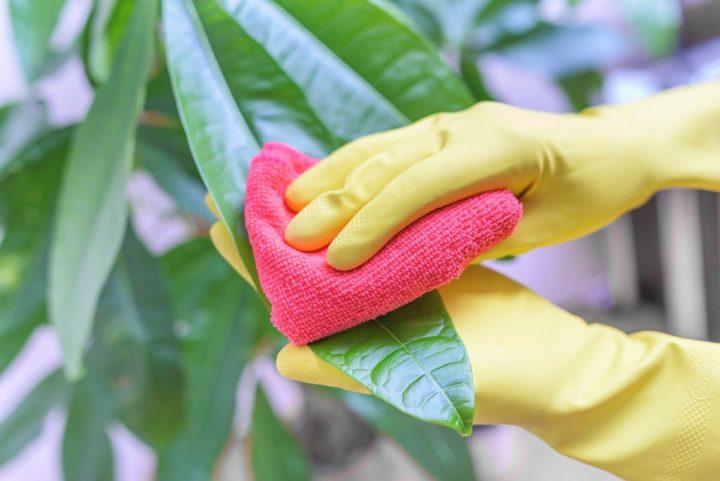 Промывка растений