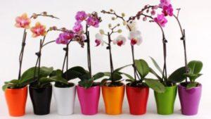 Как правильно рассадить орхидею в домашних условиях