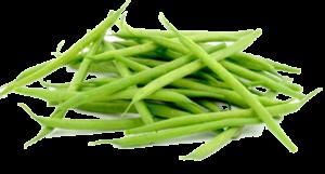 Зеленая стручковая фасоль: польза и вред для организма