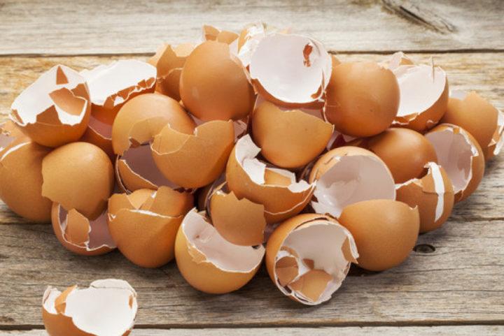 Неплохо было бы дать измельченную скорлупу яиц