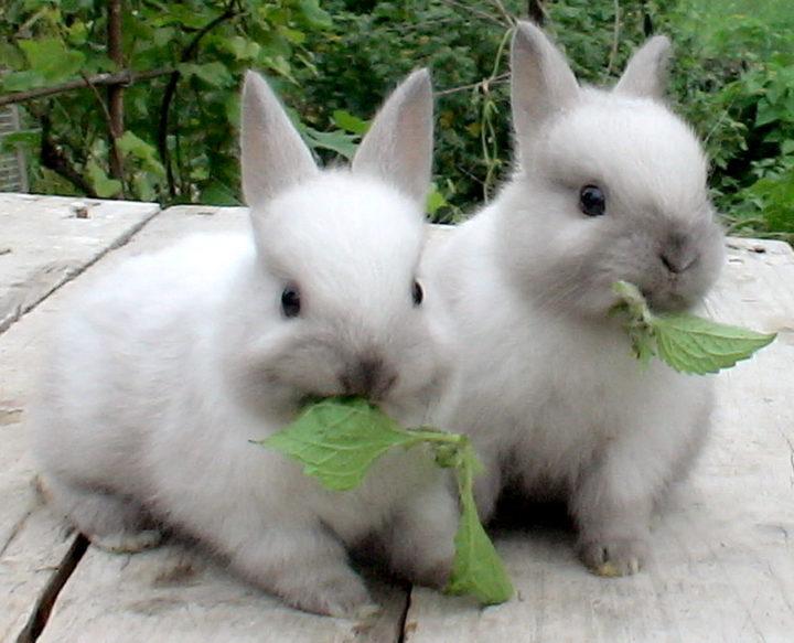 - Вкусные листики...