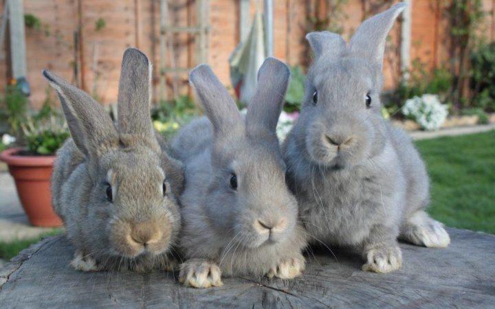 Как поить кроликов зимой при уличном содержании?
