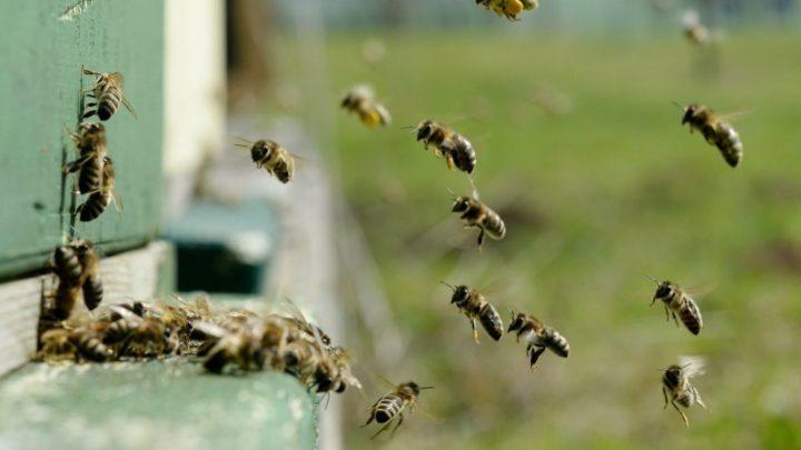 Здоровые пчелки